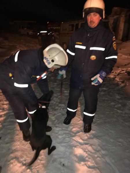 спасатели кинологи мчс лабрадор собака поиски|Фото:Пресс-центр Поисково-спасательной службы Челябинской области